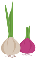 graphic of purple and white onions growing tops